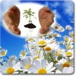 flores de bach ,1