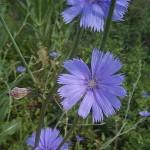 flores de bach ,4