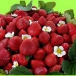 fresas,5