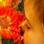 flores,3