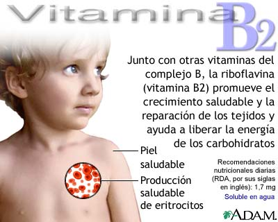 importancia y funcion de la vitamina a: