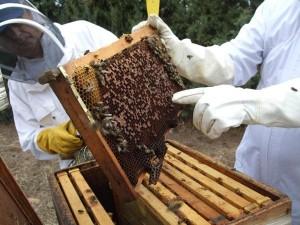 miel-hacer-frente-bacterias-resistentes-antibioticos_1_660008