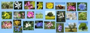 flors-de-bach3-e1335698964587