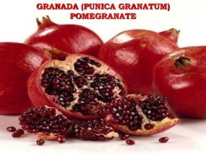 granada-111008105548-phpapp01-thumbnail-4