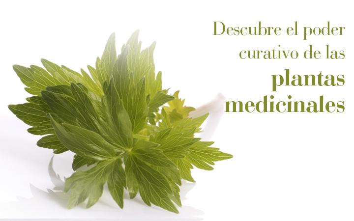 Dependiendo de su naturaleza química, las sustancias activas de los