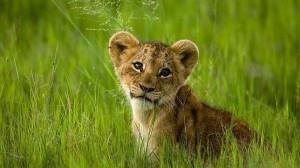 leon--644x362