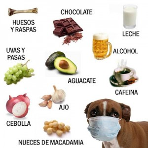 alimentos_toxicos_perros_gatos