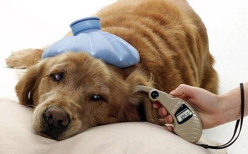 perro-enfermo (1)