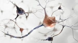 Cuantas-neuronas-mueren-al-dia-3