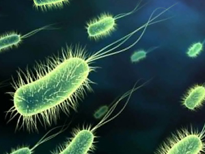 bacteria-grumos