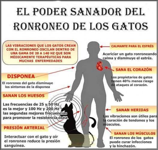 poder-sanador-ronroneo-gato-527x500
