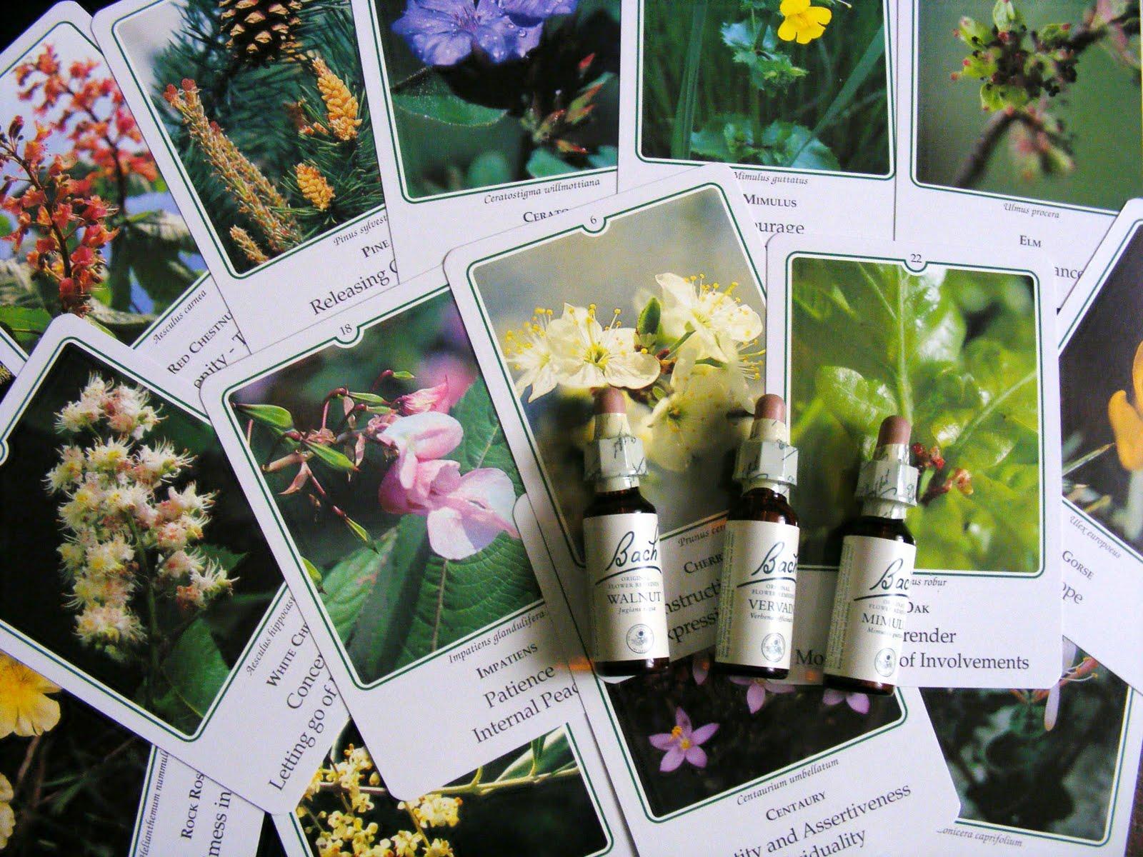 FlowerEss241