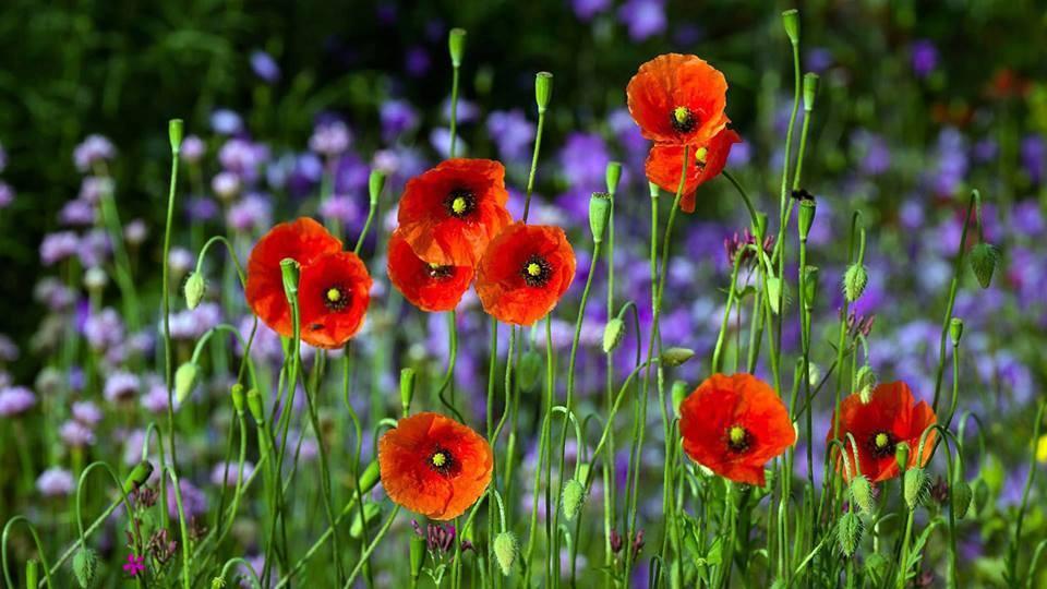 Las plantas tienen muchos mecanismos para asegurarse de que florecen en el momento adecuado