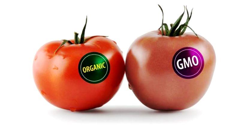 transgenicos-etiquetado