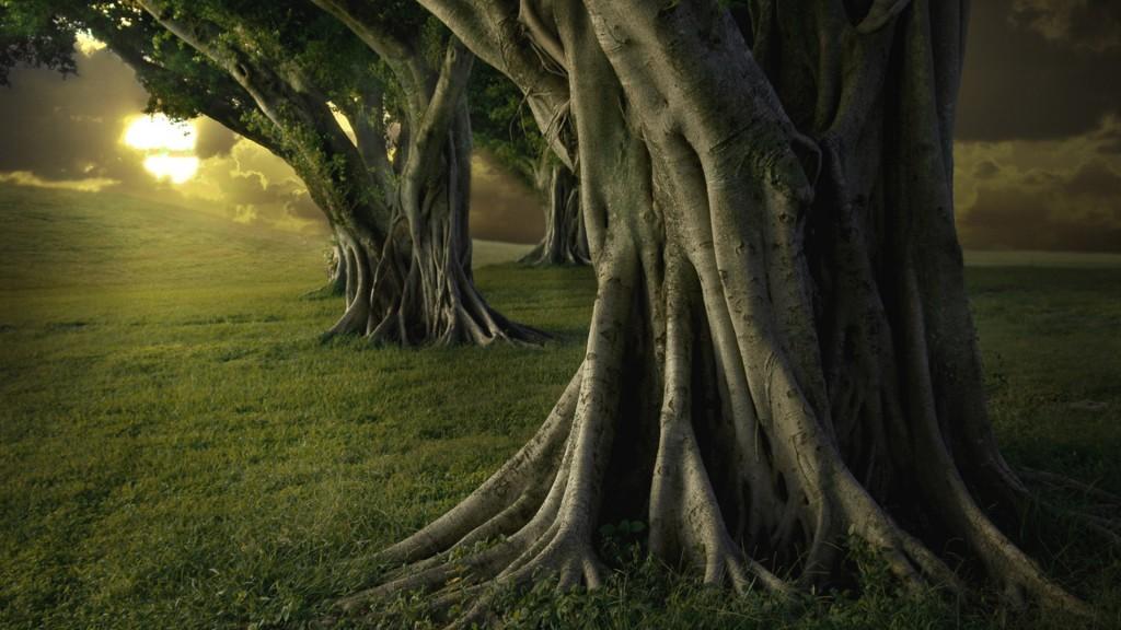 Bosque-centenario-terapeutico