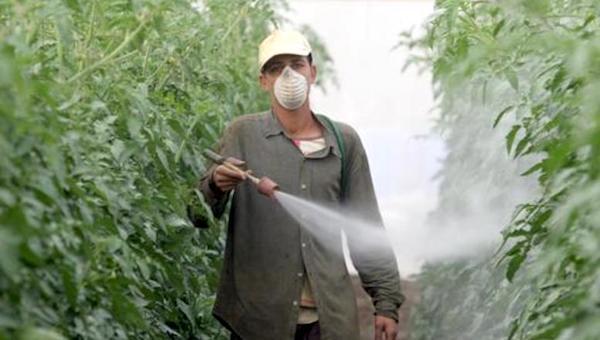 Pesticides Spain