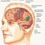 hemisferios-6-bgif