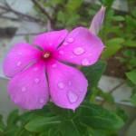 flores,4