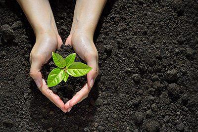 plantas-medicinales-agua-herbolario-casa-pia-dietetica