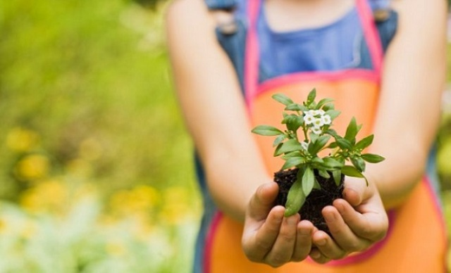 plantas-para-los-niños