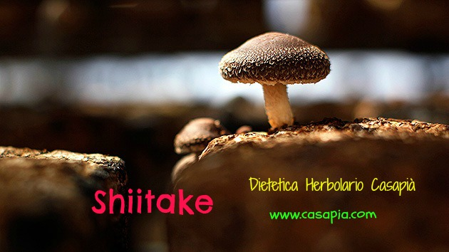 shitake1