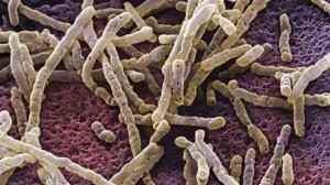 bacteria-botulismo-salud