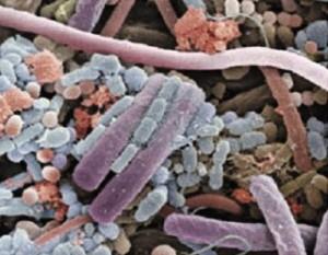 microbiota-diversa-de-bacterias-y-hongos3