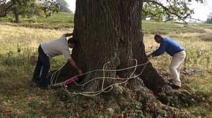 El sistema inyecta la solución de ajo a través de ocho puntos distribuidos en el árbol.