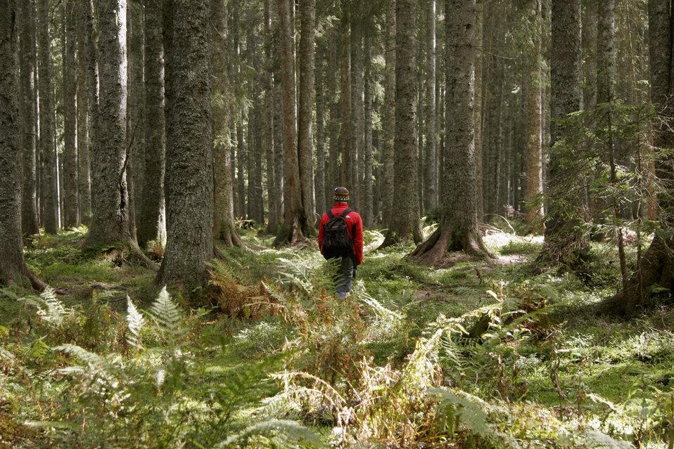 Una-persoa-pasea-por-el-bosque_54412779165_54028874188_960_639