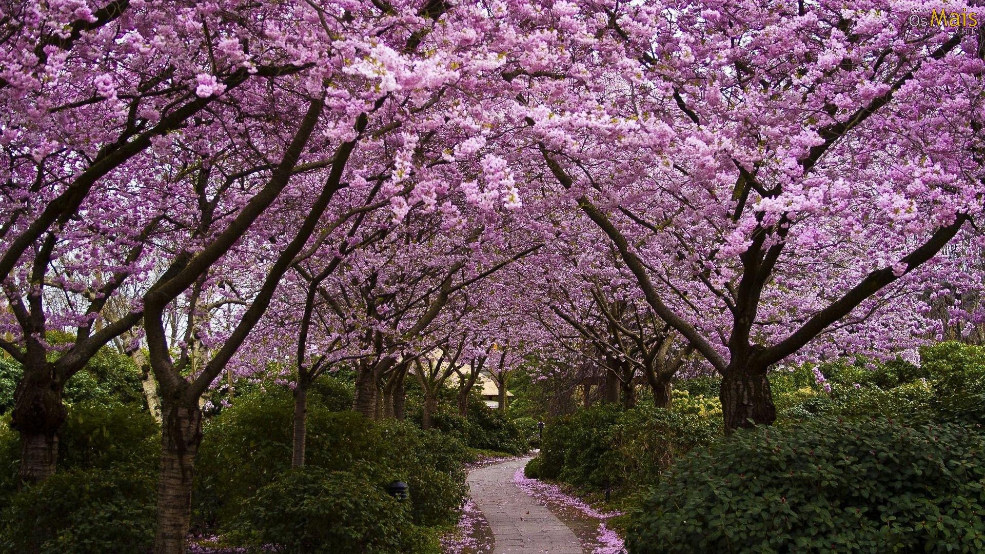 jardim-primavera-wallpaper