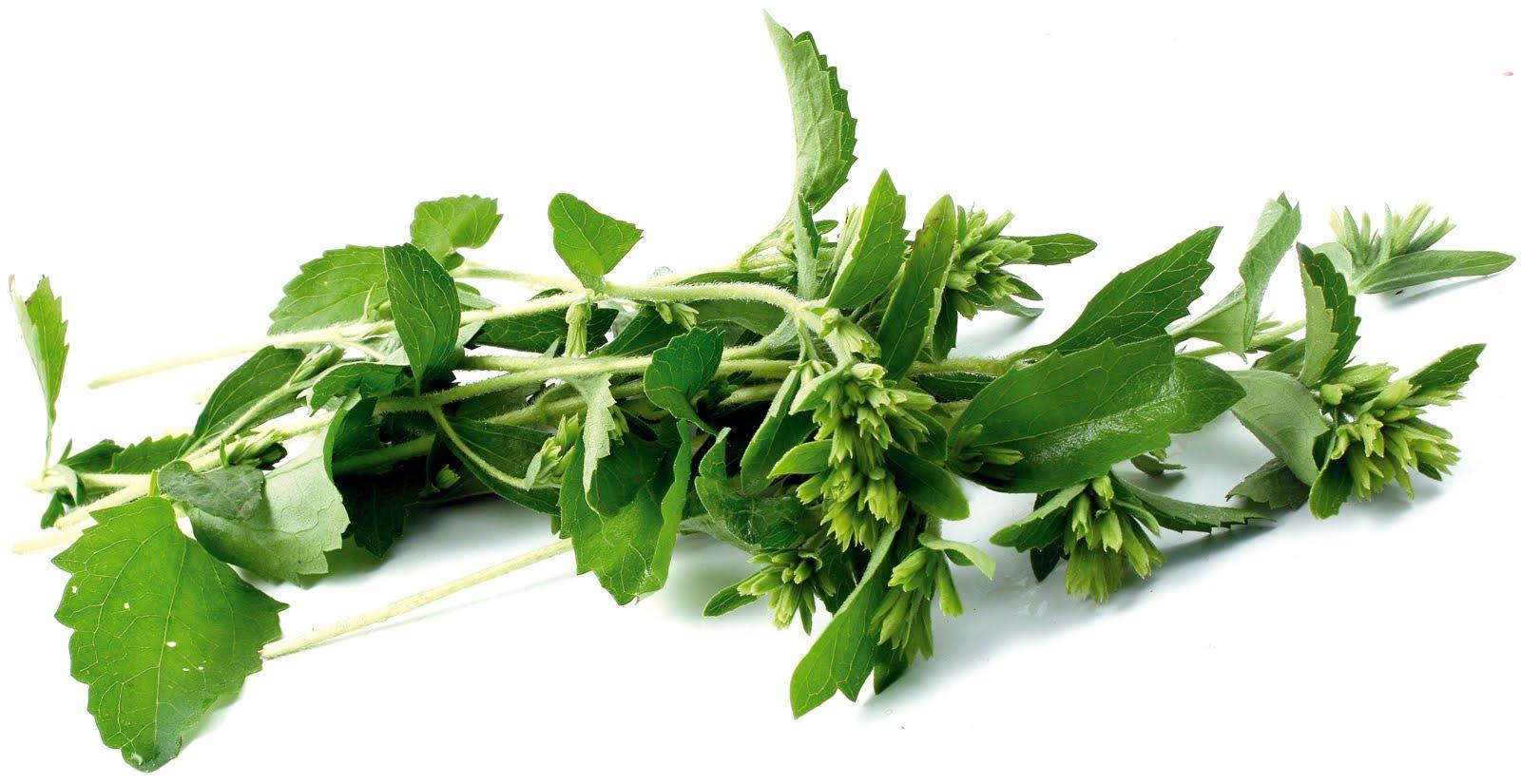 Con qué otros nombres se conoce la Stevia rebaudiana