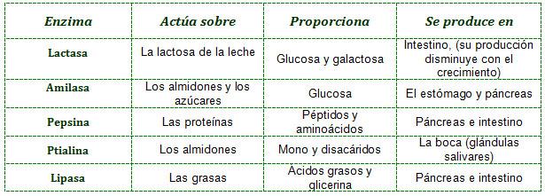 enzimas_digestivas