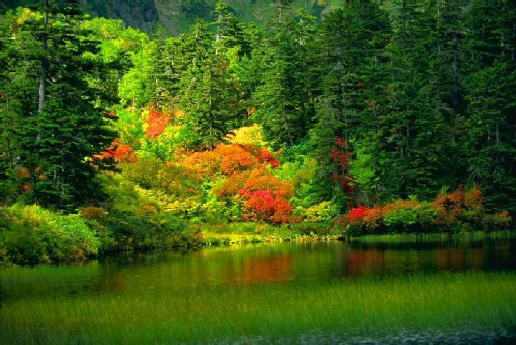 paisajes-hermosos-paisaje-en-verde-1024x684