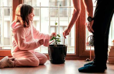 moringa-planta-propiedades-beneficiosas-para-los-niños