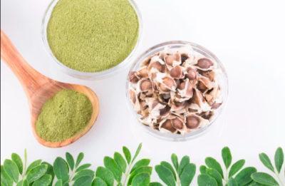 moringa-polvo-de-hoja-planta-medicinal