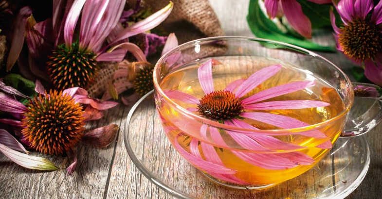 equinacea como alimento para el resfriado y la gripe